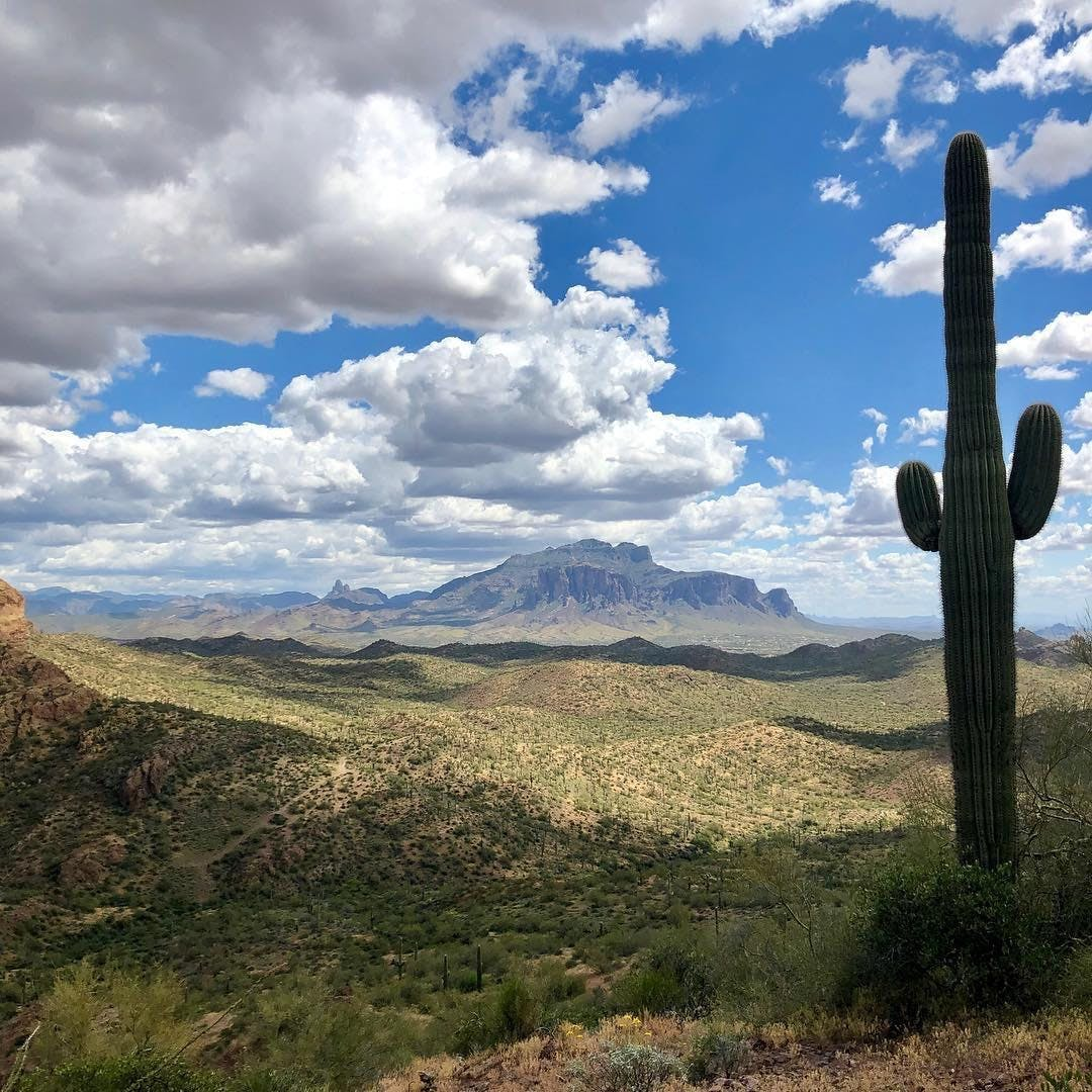 Partnering with Plant Medicine:  Desert Guides & Allies