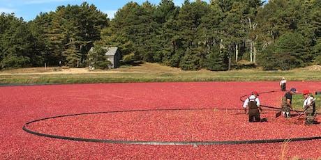 Cranberry Harvest Bog Tour tickets