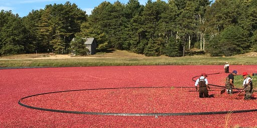 Cranberry Harvest Bog Tour