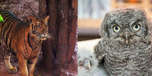 Global Social Hour: International Wildlife Conservation