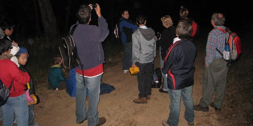 Night Walk Smalls Creek Kellyville