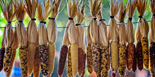 Autumn Community Gathering: Seeds of the Gold Rush