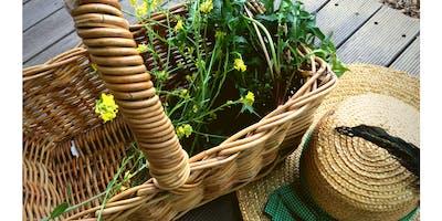 Identifying Edible Weeds