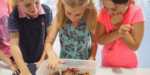 Marine Biologist for a Day - Junior - Wed 18th Dec 2019 - Sunshine Coast