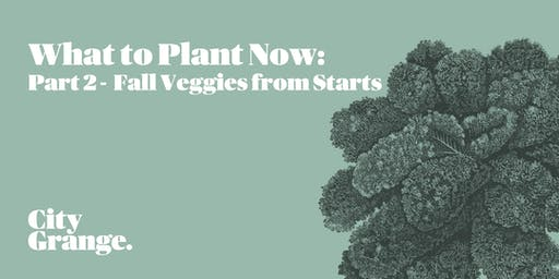 What to Plant Now: Part 2 - Fall Veggies from Starts
