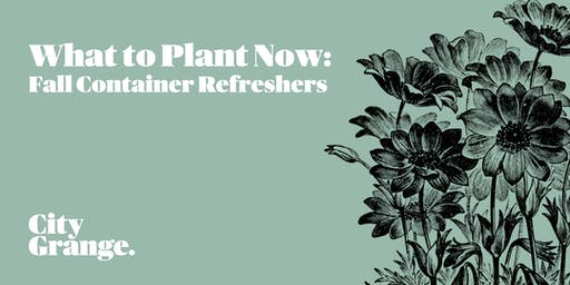 What to Plant Now: Fall Container Refreshers