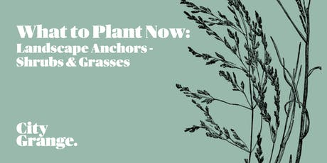 What to Plant Now: Landscape Anchors - Shrubs & Grasses tickets
