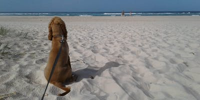 Take Your Lead – Free Dog training sessions (Class A)