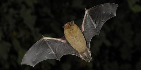 Rivers Week - Riverside Bat Walk tickets