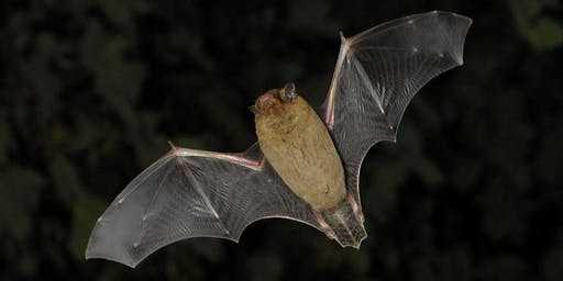 Rivers Week - Riverside Bat Walk