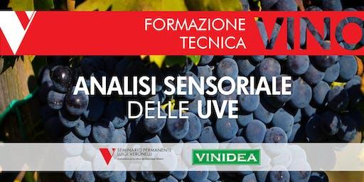 Analisi Sensoriale delle uve