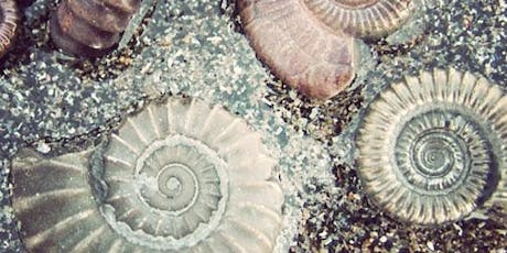 Lesnes Abbey Summer Events: Fossil Hunt tickets