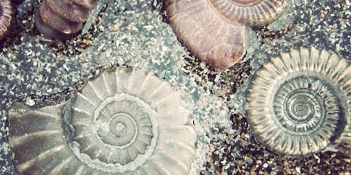 Lesnes Abbey Summer Events: Fossil Hunt