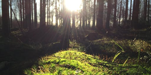 A Day Retreat of Forest Bathing