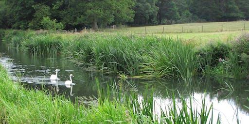 Rivers Week - Riverside Bird Walk