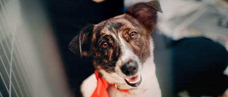 Need support for your new rescue or foster dog?