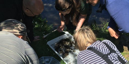 Riverfly Monitoring Workshop- Tickled Trout