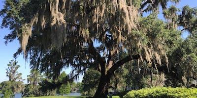 Home School - Tree-mendous Trees