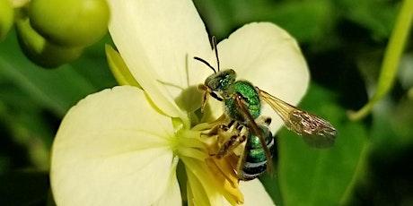 Home School - Power of Pollinators ingressos