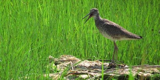 NYC Wild! Shorebird Season: Brooklyn: Marine Park Salt Marsh Photography and Nature Walk