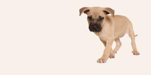 Dog Foster Orientation 10/16/19