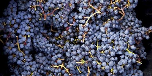 Wine Au Naturale Wine Tasting