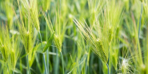 All About Cover Crops