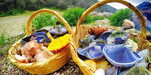 Wild Mushroom Foraging & Feast