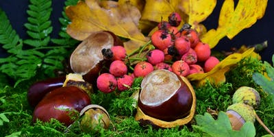 Fall Harvest: Foraging in the Forest