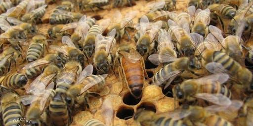 Beekeeping Through the Winter Months