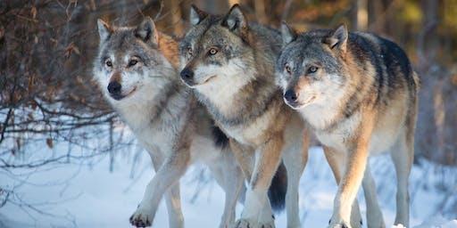 Grupo de Estudos de Xamanismo - Lobo