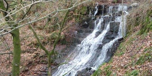 CWW Walk 6 - Cuckoo Wood & Cleddon Falls