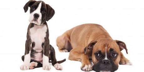 Dog Behavior for Rescues and Shelters tickets