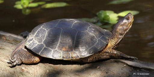 Hike & Learn: Western Pond Turtle Natural History with Dr. Michael Parker