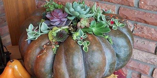 Pumpkins + Succulents = Succulumpkins!