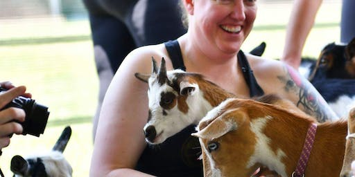 Baby Goat Yoga at Bear Chase Brewing Company