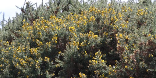 Gorse Control Workshop