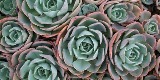 DIY Succulent Dish Garden - Wallsend Library
