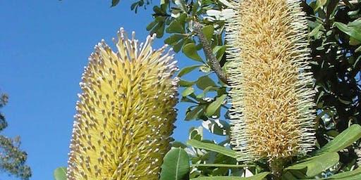 Biodiversity Month-September Flora Study