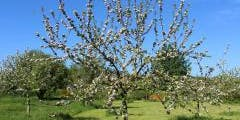 A Year in the life of Bridport Community Orchard