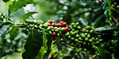 Cupping at Tamper - Costa Rica  tickets