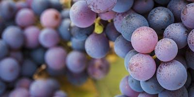 Wine-Tasting Altesino