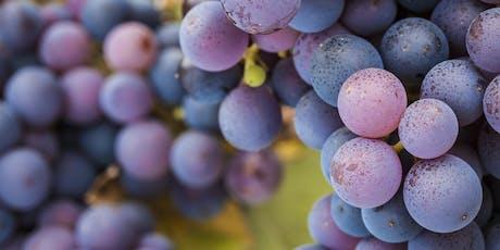 Wine-Tasting Altesino Tickets