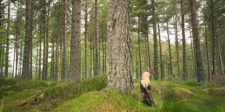 Forest and Wildlife Crime – Awareness, Prevention & Enforcement tickets