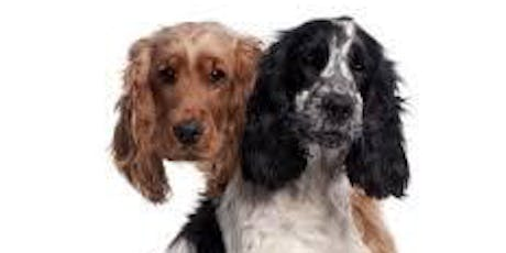 Spaniel Play Date - Ticketed event tickets