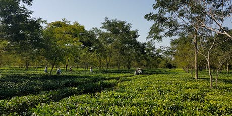 Speciality Assam Teas from Single Estate Teas, India tickets