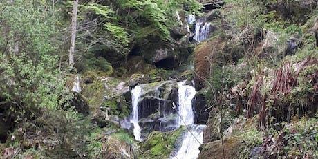 So,22.09.19 Wanderdate - Gertelbachwasserfälle im Schwarzwald für 40-65J Tickets