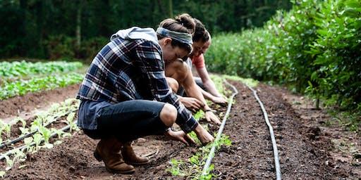 Fresh Harvest Volunteer Day!