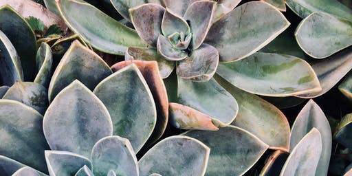 Free Class for Kids: Make Your Own Succulent Terrarium with Winterberry Gardens