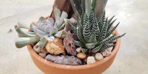 Create + Sip Succulent Potting Party